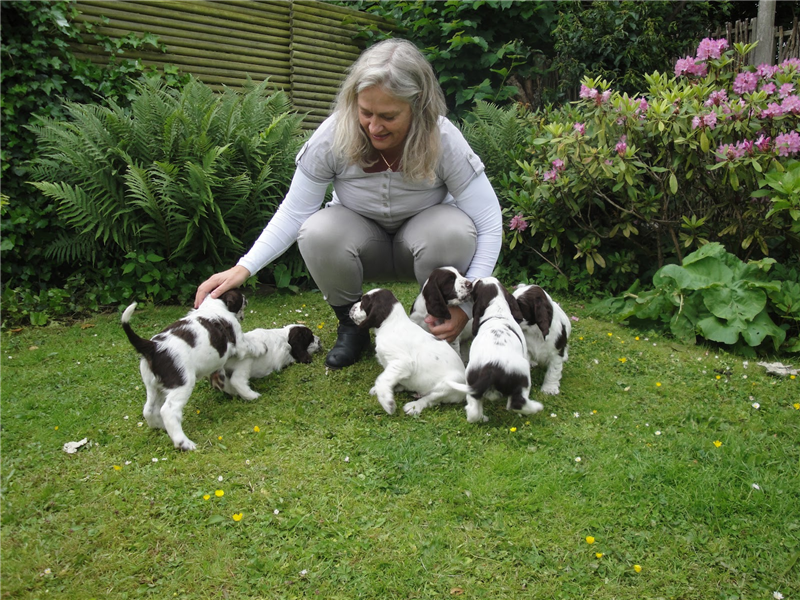 Merete with Cilli's first litter